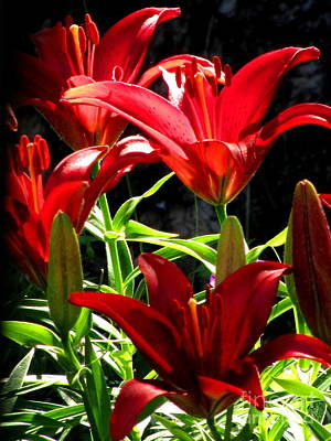 Asiatic Lily Photograph - Razzle Dazzle Reds by Marilyn Smith