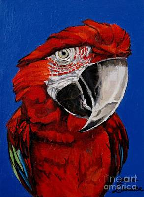 Painting - Razzy Red - Bird- Macaw by Grace Liberator