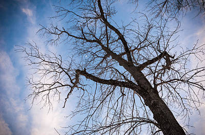 Winter Trees Photograph - Reach For The Sky by Kristopher Schoenleber