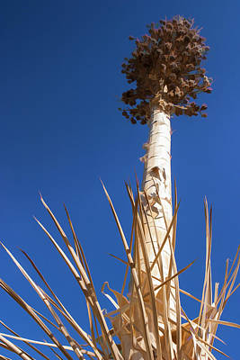 Photograph - Reach For The Sky by Scott Campbell