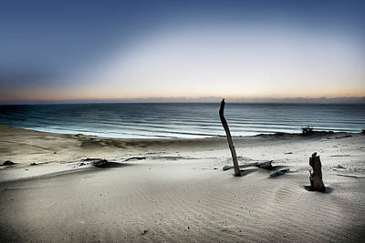 Driftwood Photograph - Reach For The Sun by Mel Brackstone