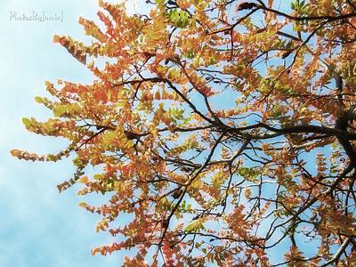 Photograph - Reaching Autumn by Jamie Johnson