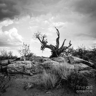 Photograph - Reaching Bw by Cheryl McClure