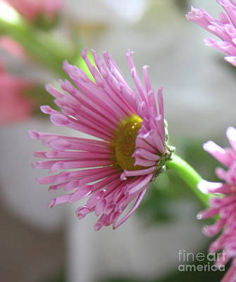 Pink Flowers Photograph - Reaching by Cathy Lindsey