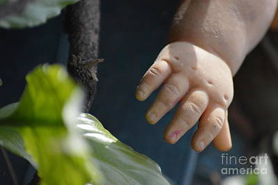 Photograph - Reaching For The Green Goddess by Brian Boyle