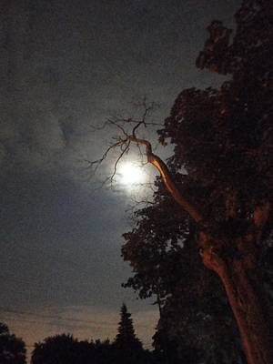 Photograph - Reaching For The Moon by Guy Ricketts