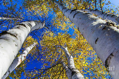 Photograph - Reaching For The Sky by CJ Benson