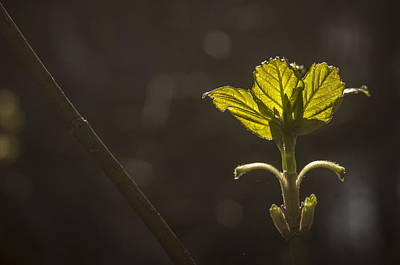 Photograph - Reaching For The Sun by Alan Norsworthy