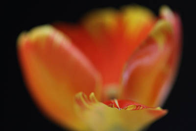 Photograph - Reaching Out by Juergen Roth