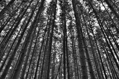 Photograph - Reaching Pines by Don Nieman