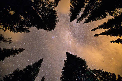 Photograph - Reaching Up To The Stars by James BO  Insogna