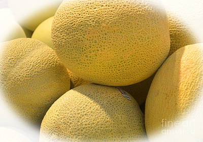 Cantaloupe Photograph - Ready And Ripe by Tina M Wenger