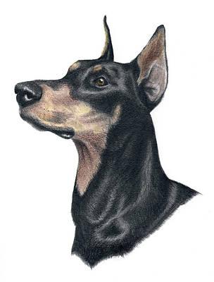 Police Dog Drawing - Ready Doberman by Heather Mitchell