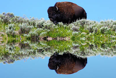 Reflection Photograph - Ready For A Drink by Shane Bechler