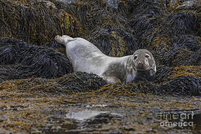 Photograph - Ready For A  Swim by Diane Macdonald