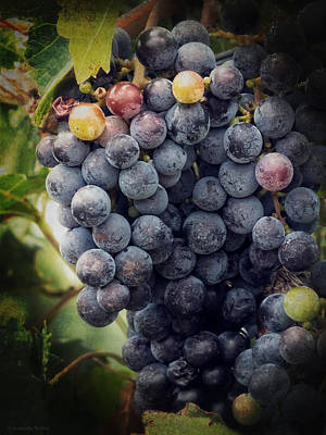 Photograph - Ready For Harvest by Lucinda Walter