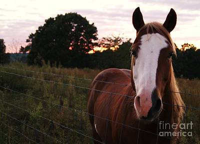 Photograph - Ready For Kisses by Julie Clements