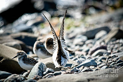 Photograph - Ready For Lift Off by Cheryl Baxter