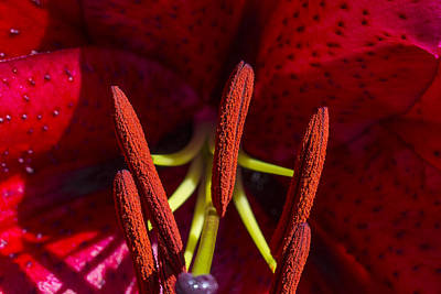 White Lily Photograph - Ready For That Bee 4 by Scott Campbell