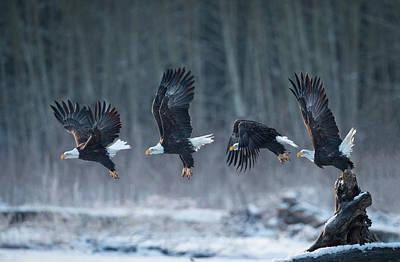 Eagle Photograph - Ready, Go! by Katsu Uota