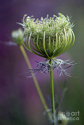 Photograph - Ready To Burst 3 by Karen Adams