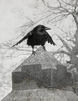 American Crow Photograph - Ready To Fly by Gothicrow Images