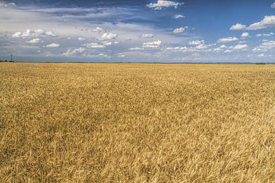 Photograph - Ready To Harvest by Rob Graham