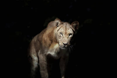 Photograph - Ready To Pounce by Emily Stauring