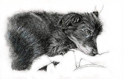 Drawing - Ready To Sleep by Penny Collins