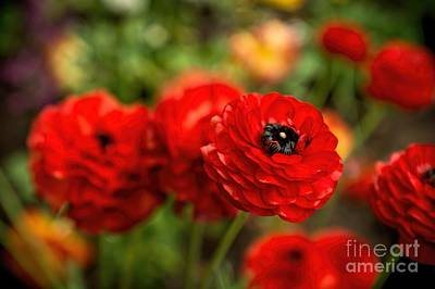 Photograph - Really Red by Peggy Hughes
