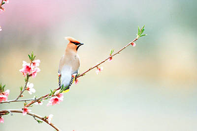 Focus On Foreground Photograph - Rear View Of Bird Perching On Branch by Panoramic Images