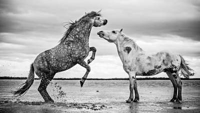Photograph - Rearing Stallion I by Tim Booth