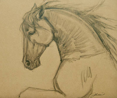 Drawing - Rearing Stallion by Jani Freimann