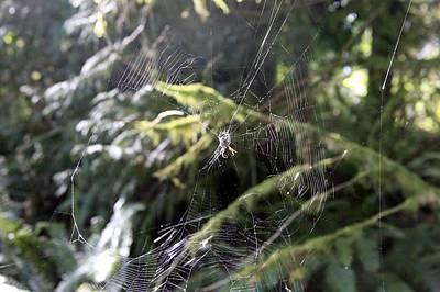 Photograph - Rebuilding The Web by Donald Torgerson