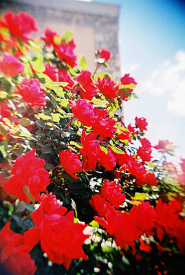Photograph - Recesky - Bright Roses by Richard Reeve