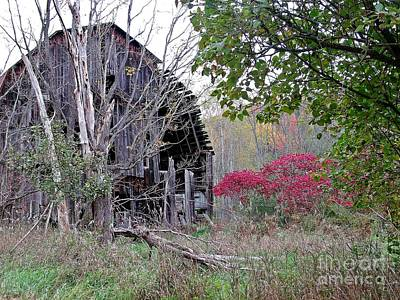 Photograph - Reclaimed By Nature by Christian Mattison