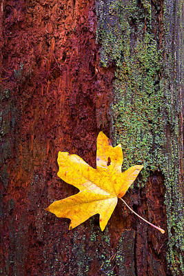 Autumn Leaf Photograph - Reclamation by Mike  Dawson