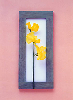Rectangular Purple Frame With Yellow Art Print by Panoramic Images