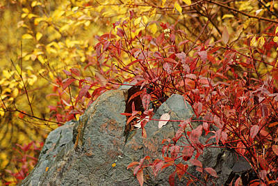 Photograph - Red   Yellow   Rock by Daniel Woodrum
