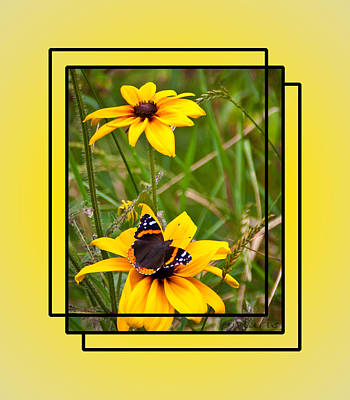 Photograph - Red Admiral Butterfly On Rudbeckia by Patti Deters