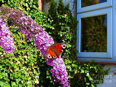 Personalized Name License Plates - Red Admiral on a Budlier by The Kitchen Window  by Joan-Violet Stretch