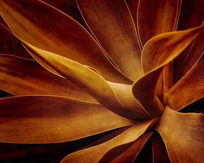 Photograph - Red Agave by Irene Suchocki