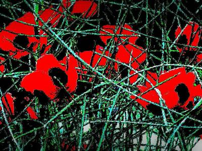 Photograph - Red An Black Poppies 1 by Nadalyn Larsen