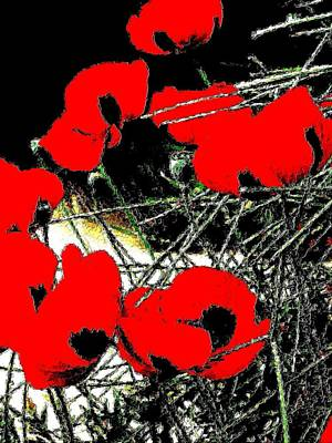 Photograph - Red And Black Poppies 2 by Nadalyn Larsen