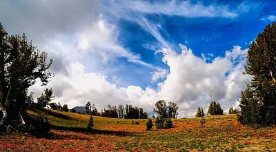 Amador County Photograph - Red And Blue by Don Bendickson