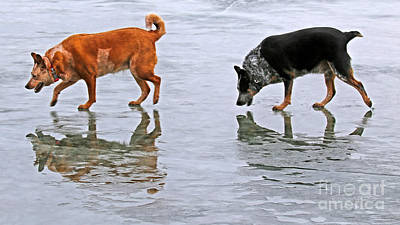 Photograph - Red And Blue Heelers by Elizabeth Winter