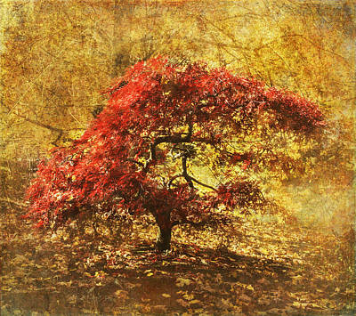 Photograph - Red And Gold by Angie Vogel