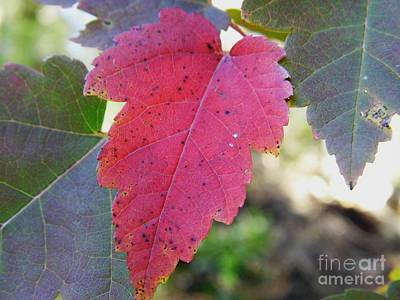 Photograph - Red And Green by D Hackett