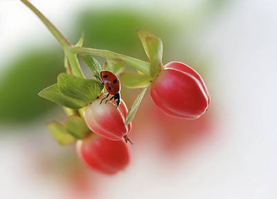 Ladybug Photograph - Red And Green by Ellen Van Deelen
