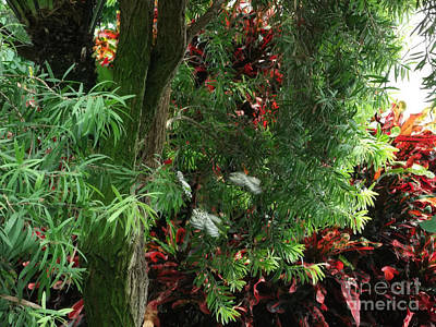 Photograph - Red And Green Foliage by Luther Fine Art